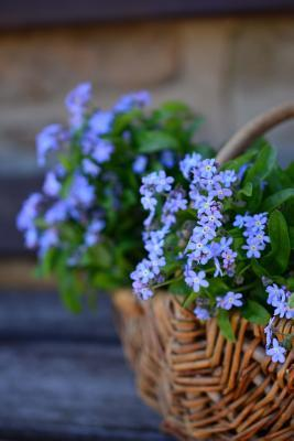 Beautiful Forget Me Not Flowers in a Basket Journal
