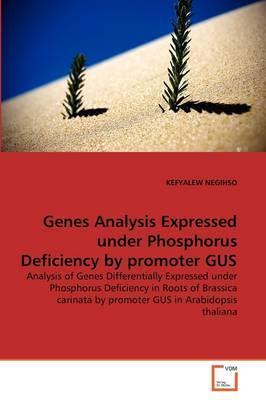 Genes Analysis Expressed under Phosphorus Deficiency by promoter GUS