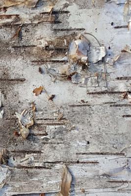 Dry Birch Bark Journal