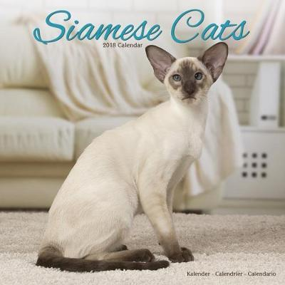 CATS - SIAMESE
