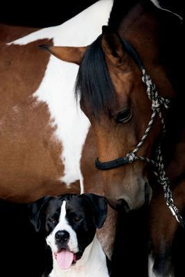Horse and Dog Journal