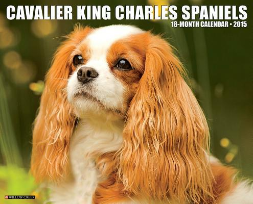 Cavalier King Charle...