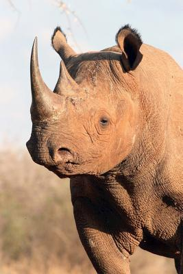 Black Rhinoceros Animal Journal