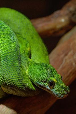 Boomslang Deadly Snake Journal