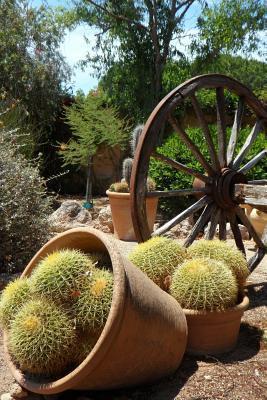 Cactus in the Garden...