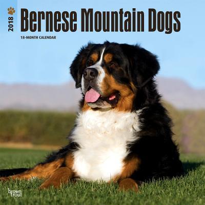 Bernese Mountain Dogs 2018 Calendar