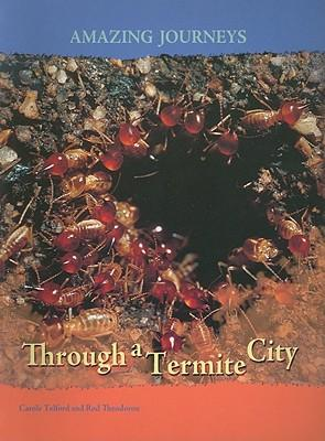Through a Termite City