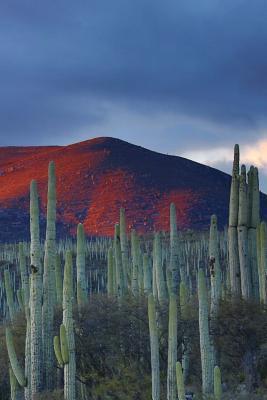 Desert Vista Cactus ...