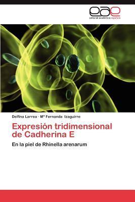 Expresión tridimensional de Cadherina E