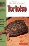 The Guide to Owning a Tortoise