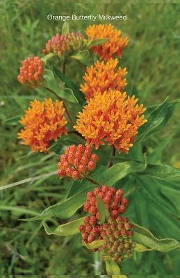Orange Butterfly Mil...