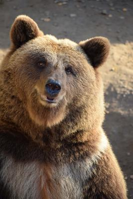 Brown Bear Checking You Out Journal