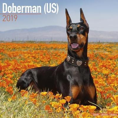 Doberman (US) Calendar 2019