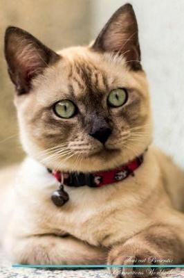 Thai cat Affirmation...