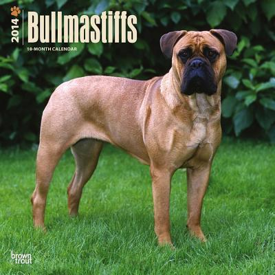 Bullmastiffs 2014 18-Month Calendar