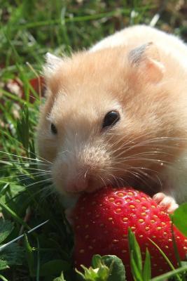 Golden Hamster Enjoying a Ripe Red Strawberry Journal
