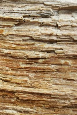 Journal Split Wood Face