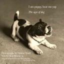 I Am Puppy Hear Me Yap