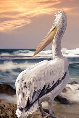 Dalmation Pelican Journal