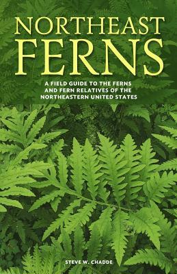 Northeast Ferns
