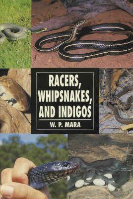 Racers, Whipsnakes and Indigos