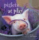 Piglets @ Play
