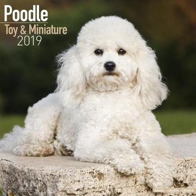 Poodle Toy & Miniature Calendar 2019 (Square)