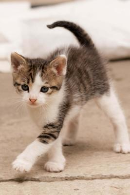 Adorable Calico Kitten Journal