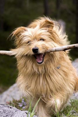 Happy Dog With a Sti...
