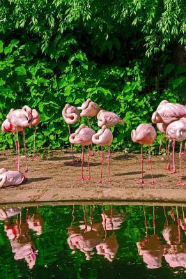 Pink Flamingo Journa...