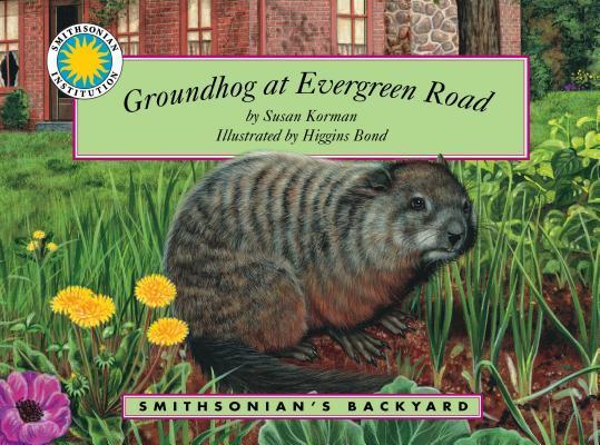 Groundhog at Evergreen Road