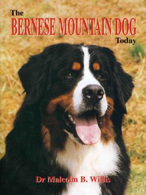 The Bernese Mountain Dog Today