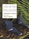 Life of the pigeon