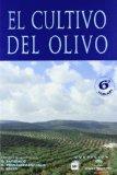 Cultivo del olivo, El