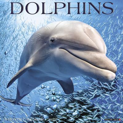 Dolphins 2019 Calendar