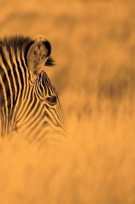 Alive! Zebra Stripes - Sepia - Photo Art Notebooks (6 X 9 Series)