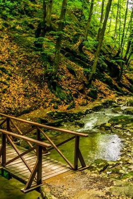 Wood Bridge in the Forest in Bulgaria Journal