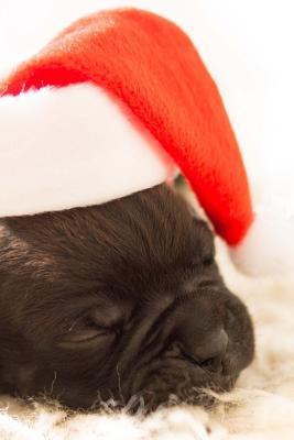 Sleepy Puppy Wearing...