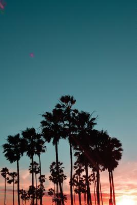 Sunset & Palm Trees,...