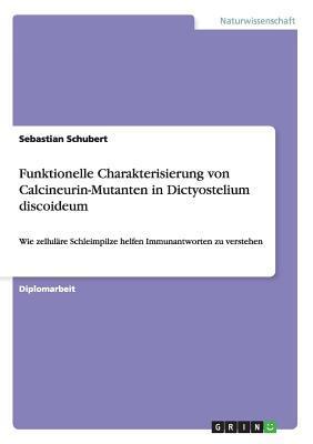 Funktionelle Charakterisierung von Calcineurin-Mutanten in Dictyostelium discoideum
