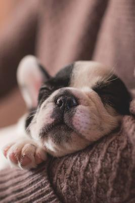 A Sweet Sleeping Black and White French Bulldog Puppy Pet Journal