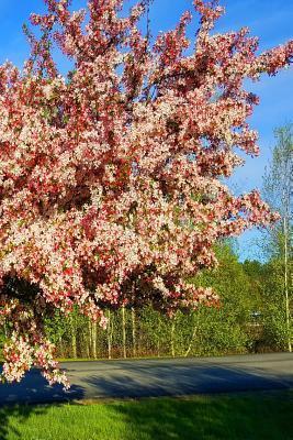 Journal Flowering Tree Sunlight Shadows