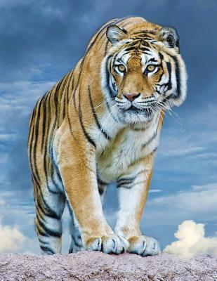 Tiger Blank Sketchbo...