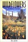 Wildflowers of the Desert Southwest