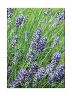 Lavender Blue Classic Notecards