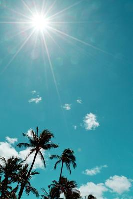 Hawaiian Palm Trees, Maui, 150 Lined Sheets