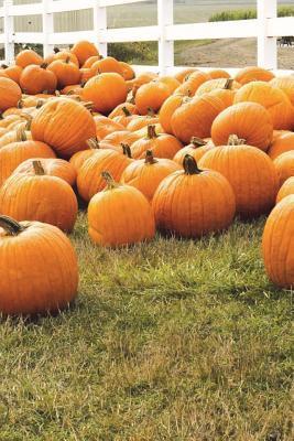 Autumn Pumpkin Patch...