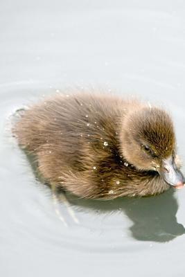 Cute Duckling Journal