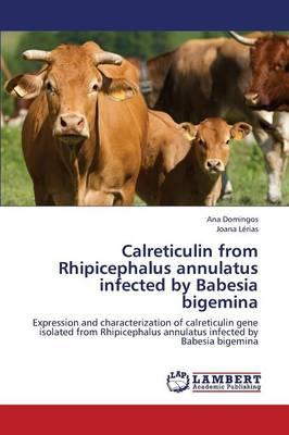 Calreticulin from Rhipicephalus annulatus infected by Babesia bigemina