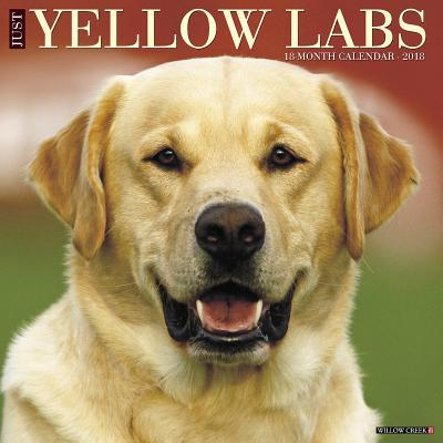 Just Yellow Labs 201...